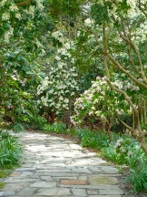 Pieris path