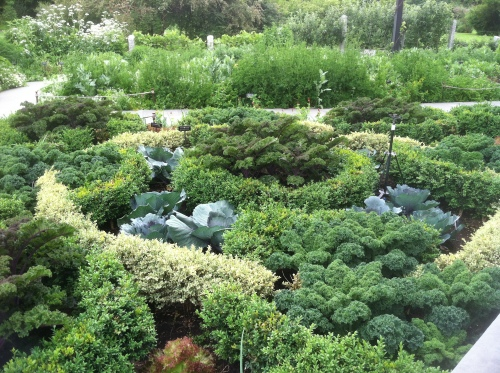 We got a kick out of the elaborate kale garden at the BBG
