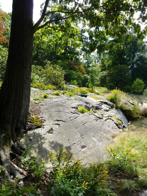 Native garden at NYBG