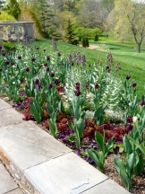 Love the waves of fritillaria, lettuce, and tulips. Playful and sophisticated.